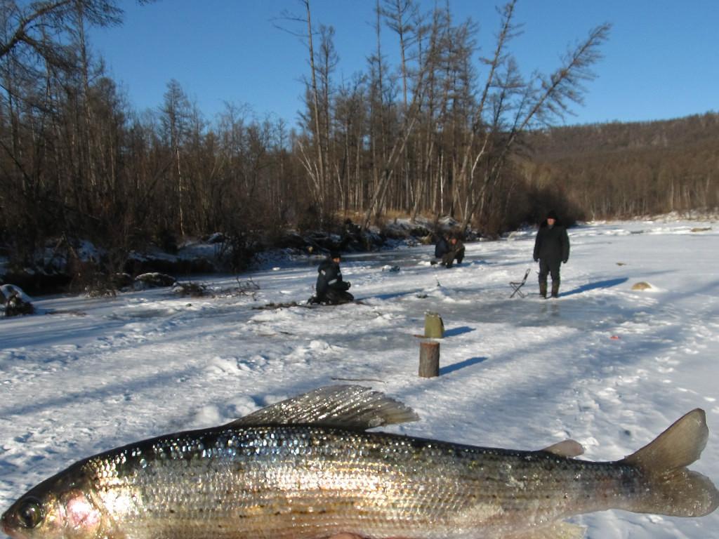 Зимния ловля тайменя и ленка